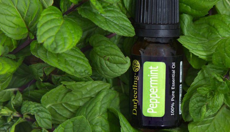 Peppermint Peppermint Essential Oil – Darjeeling Aroma