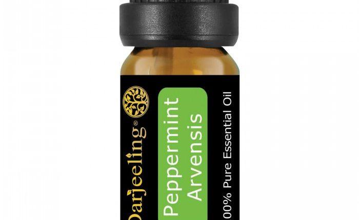 jual peppermint essential oil terbaru harga murah
